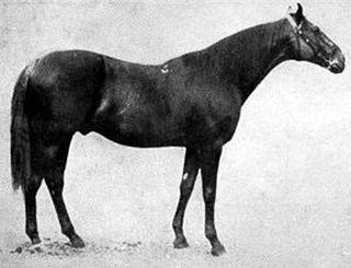 Bona Vista British Thoroughbred racehorse