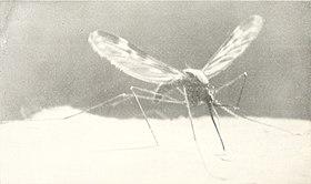 Book of monsters (1914) (20399001375).jpg