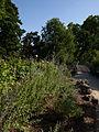 Bordeaux Jardin Public Vue n°2.jpg