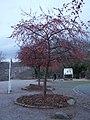 Bornich, Germany - panoramio (19).jpg