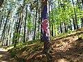 Bosque de Oma (25).JPG