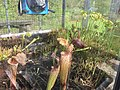 Botanische tuinen Utrecht 99.jpg