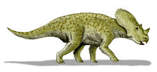 Illustration av Brachyceratops.