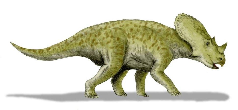 Brachyceratops BW