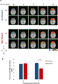 Brain maps of oxygenated haemoglobin during hypercapnia (5% CO2) both before (0 h) and after (2 h) intake of either a low- or high-flavanol dietary intervention.webp