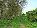 Bridleway Beside Lingholmes Plantation - geograph.org.uk - 1256673.jpg