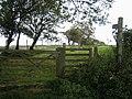 Bridleway near Llangadfan - geograph.org.uk - 560340.jpg