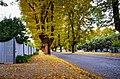 Bright, Vic autumn.jpg