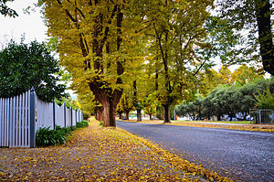Bright, Victoria - Autumn in Bright is colourful and lush, with cool days and cold nights.
