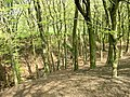 Buckden Woods (west) - geograph.org.uk - 418040.jpg