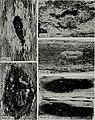 Bulletin (1953) (20434317891).jpg