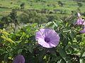 Bunga Di Songgoriti.jpg