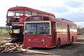 Buses (104949942).jpg