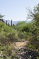 Butcher Jones Trail, Burro Cove and Beyond, Tonto National Park, Arizona - panoramio (30).jpg