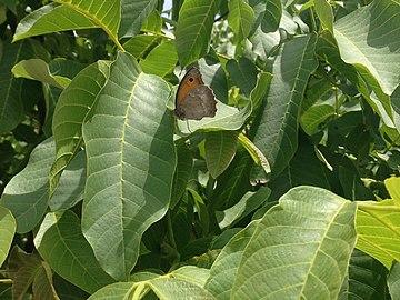 Butterfly on Leaf.jpg