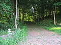 Butternut Hill driveway.jpg