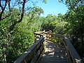 CNS Turtle Mound boardwalk01.jpg