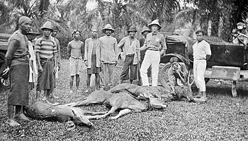 Hunters posing with shot deers on a plantation