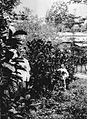 COLLECTIE TROPENMUSEUM Twee planters in tuin 'B' tussen Liberia-koffie van februari 1896 cultuuronderneming Way-Lima in de Lampongse Districten Zuid-Sumatra. TMnr 60013368.jpg