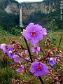 Cachoeira do Tabuleiro e Flores Roxas.jpg