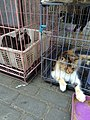 Caged cats in Pasty Market.jpg