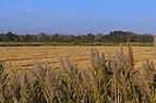 Camargue Parc naturel régional ciconia.jpg