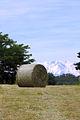 Campo vicino Cairate - panoramio.jpg