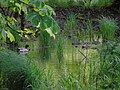 Canards dans eau.jpg