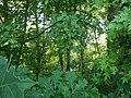 Candy Fork Riverside - panoramio.jpg