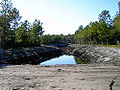 CarolinaForest005.jpg