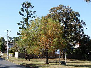 Jamboree Heights, Queensland Suburb of Brisbane, Queensland, Australia
