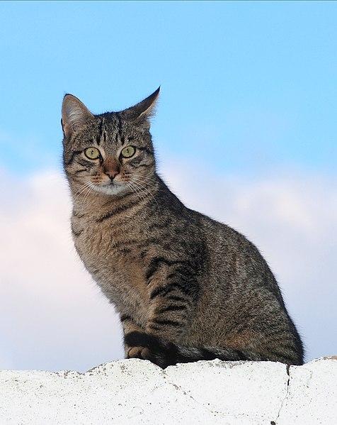 File:Cat December 2009-1.jpg