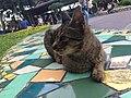 Cat at Market Market 20190605.jpg