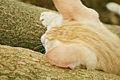 Cat public domain dedication image 0007.jpg