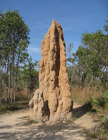 English: These termite mounds were most impres...