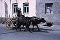 Central Asia Hammond Slides 2 09.jpg