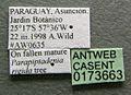 Cephalotes atratus casent0173663 label 1.jpg