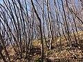 Ceppaia - panoramio.jpg