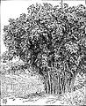 Ceylon - Page 115 - History of India Vol 1 (1906).jpg