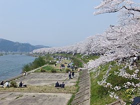 Cherry blossom along the Hinokinai River 20180428d.jpg