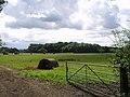 Cheshire Coppice - geograph.org.uk - 517182.jpg