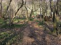 Chiltern Way - geograph.org.uk - 1271144.jpg