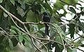 Chinnar Wildlife Sanctuary IMG 9072 (38).JPG