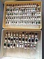 Chrysomelidae collection, Natural History Museum, London 08.jpg