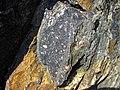 Clast-rich impact pseudotachylite (Sudbury Breccia, Paleoproterozoic, 1.85 Ga; Windy Lake Northwest roadcut, Sudbury Impact Structure, Ontario, Canada) 18 (46822791335).jpg