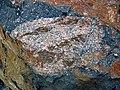Clast-rich impact pseudotachylite (Sudbury Breccia, Paleoproterozoic, 1.85 Ga; Windy Lake Northwest roadcut, Sudbury Impact Structure, Ontario, Canada) 56 (40791696903).jpg