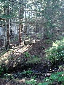 Alaska-Storia-Coastal hiking trail on Raspberry Island