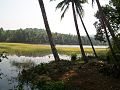 Coconut and lake.jpg