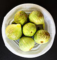 Common fig - Ficus carica - İncir 1.JPG