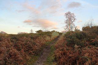 Corfe Barrows Nature Park